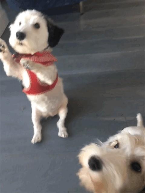 Billie&Dolly