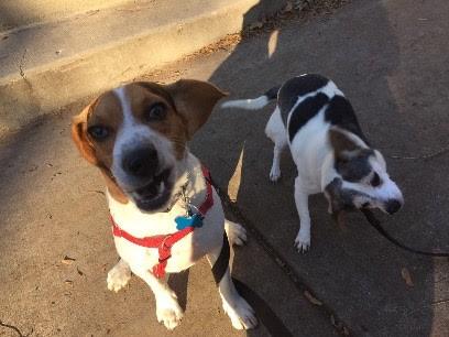 Buddy&Rocky