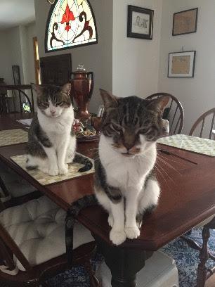 Gracie&Odie