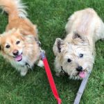 Tips for Socializing Your Dog
